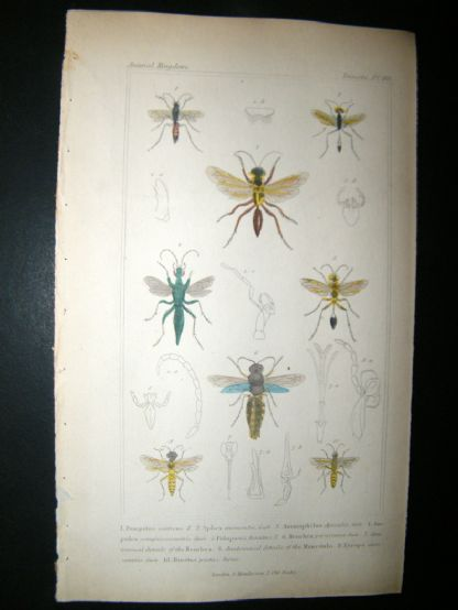 Cuvier C1835 Antique Hand Col Print. Pompilus, Sphex, Ammophilus, 80 Insects | Albion Prints